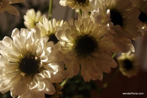 daisies-009