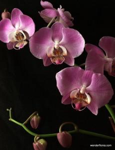 orchids-025