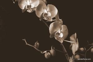 orchids-043